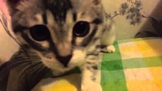 Кошка любит вареные яйца