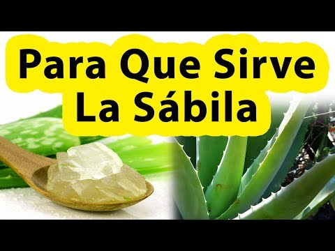 Beneficios De La Sabila Para Que Sirve La Sabila Tomada, En La Piel o El Cabello QUE CURA LA SABILA