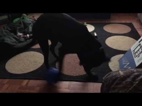 BUSTER Soft Cube Dog Toy