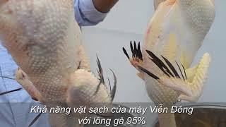 Dây chuyền máy làm gà, vịt giúp bạn tiết kiệm thời gian đến 90%