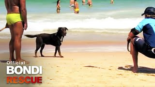 Renegade Dog Out of Control! | Best of Bondi Rescue