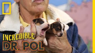 A Palmful O' Puppies - Season 1, Episode 8 | Barnyard Babies with Dr. Pol