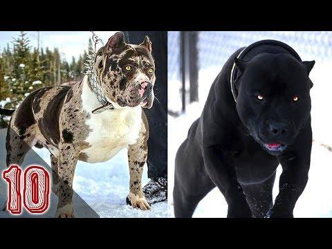 10 ANIMALI CREATI DAL DIAVOLO