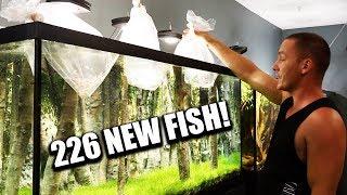 UNBOXING 226 AQUARIUM FISH