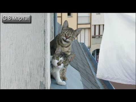 Картинки к 8 марта коты