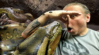 my-huge-anaconda-went-to-the-bathroom-all-over-a-guest-at-the-reptarium-brian-barczyk