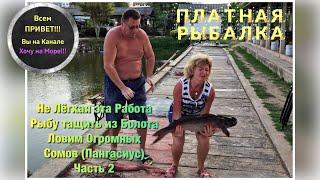 Ловим Огромных Сомов Пангасиус Платная Рыбалка часть 2 смотрите на ютуб Таиланд Паттайя