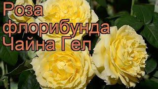 Роза флорибунда Чайна Гел (rose china girl) ???? Чайна Гел обзор: как сажать, саженцы розы Чайна Гел