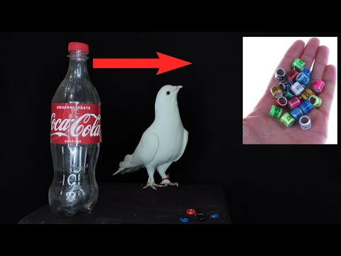 How To Make Pigeon Ring At Home   