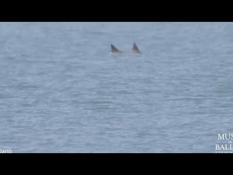 شاهد: دلافين الفاكويتا المهددة بالانقراض تعود للحياة مجددا في المكسيك…  - نشر قبل 15 دقيقة