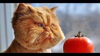 Лучшие приколы с котами 2018.  Смешные кошки 2018.  Приколы с животными и детьми.