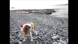 森田誠の愛犬と豊かに暮らすためのしつけ法」 DVD 2枚セット⇒http://www...