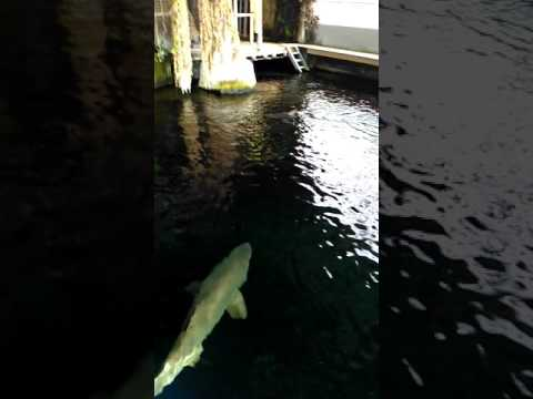 Vlog #1 Nausicaa a Boulogne-sur-Mer !
