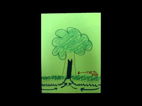 Capillary Action Drawing Animation