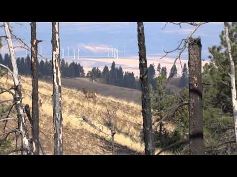 Washington Blue Mountains Elk 2015