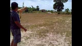 Latihan Elang Brontok Falconry Training freefly part 1