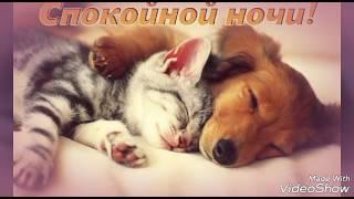 Клип на песню (Бродяга) с котиками 👍👍👍