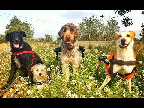 DOGS OF SPAIN: LIFE BEYOND ANIMAL ABUSE. BARCELONA!
