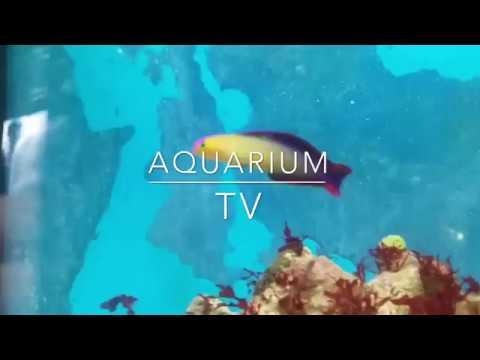 10 Fische für Aquarien von 50-60 Liter