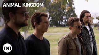 Animal Kingdom: Seasons 1-4 [RECAP]