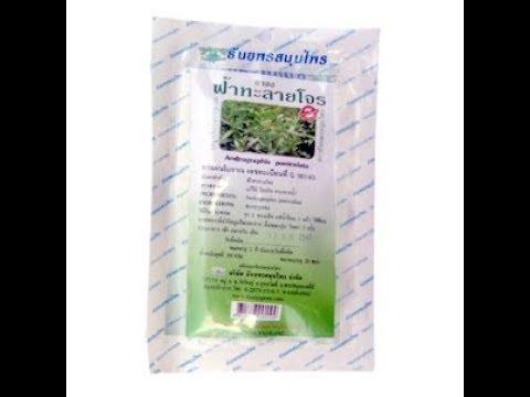 Травяной чай противовирусный и антибактериальный Андрографис, производство Тханьяпон