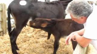 Fêtes des ânes à Lignières