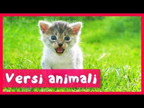Filastrocche e suoni degli animali per i bambini doovi - Animali terrestri per bambini ...