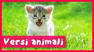 Versi Animali Per Bambini