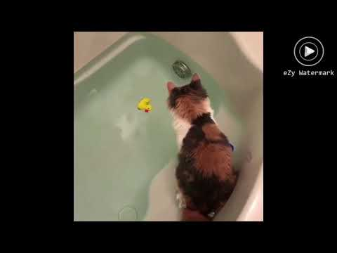 FUNNY CAT VİNES BEST OF JANUARY 2018