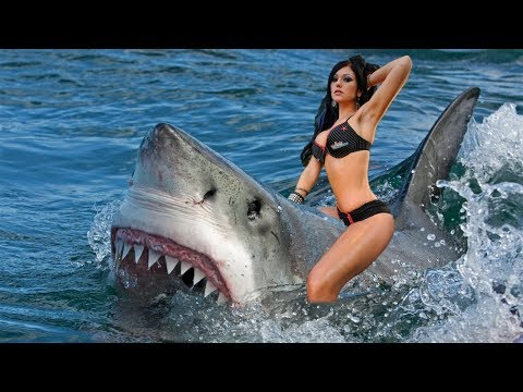 Trouble on the Jersey Shore | Shark Attack Video Series