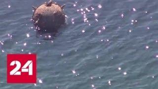 В залив рядом с американским Сиэтлом заплыла огромная мина - Россия 24