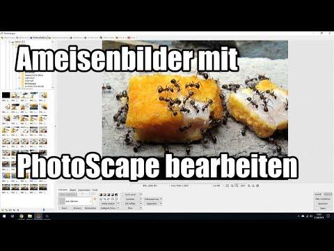 Ameisenbilder Mit PhotoScape Bearbeiten
