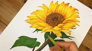 돈이 들어오는 해바라기 그리기/sunflower dra…
