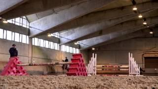 Formation cavalier préparateur jeunes chevaux