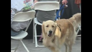 National Pet Day Celebrated In Las Vegas