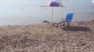 Video: Una anaconda amarilla apareció en las playas del río Paraná y causó pavor entre los turistas