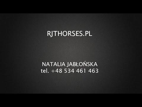 Catoki 6 Yo Horse For Sale