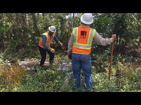 Snakes, Alligators, Heat and Humidity All in a Day's Work for PG&E Crews Restoring Power in Florida