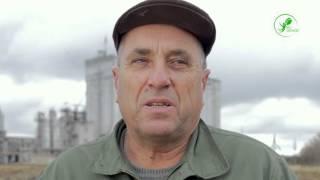 Відгук   Соняшник та Озима пшениця   Дніпропетровська обл  2015