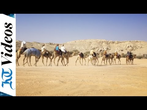 An early morning with camel trekkers in Dubai | 360 video