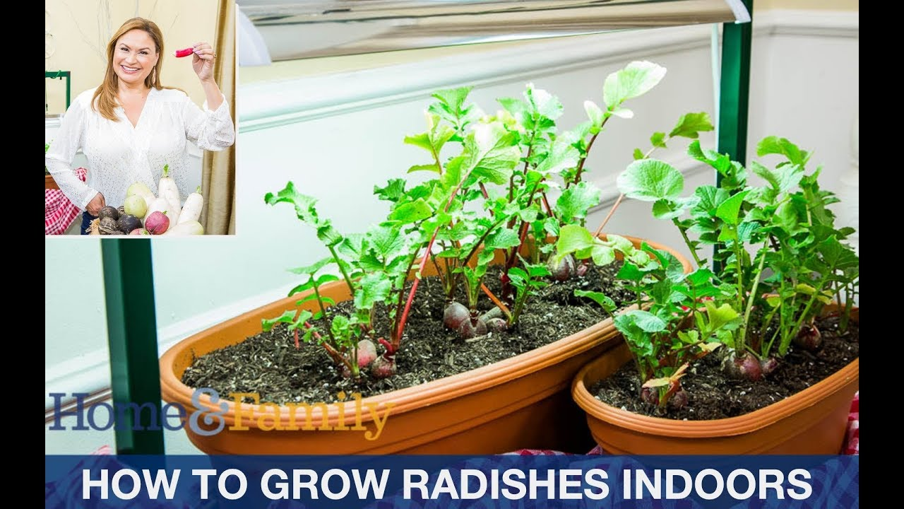 Growing Radishes In Containers From Seed Step By