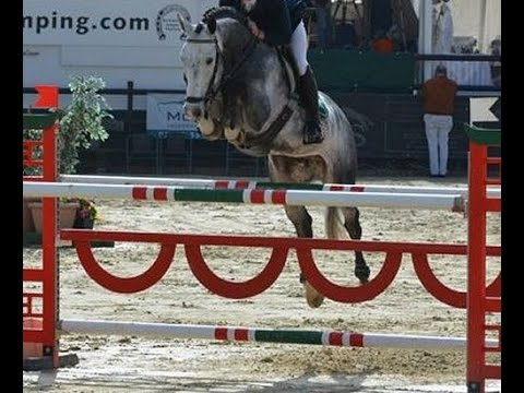 2012 gorgeous licensed Hanoverian stallion www.sporthorses-online.com from YouTube · Duration:  1 minutes 32 seconds
