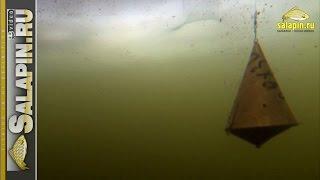 Реакция рыбы на докорм кормушкой и шарами (подводное видео, зимняя рыбалка) [salapinru](Пока в связи с выставкой не могу смонтировать очередную экшн-рыбалку, небольшая подводная зарисовка. А..., 2015-02-27T05:45:01.000Z)