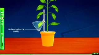 Carbon dioxide is needed for photosynthesis Science elearning