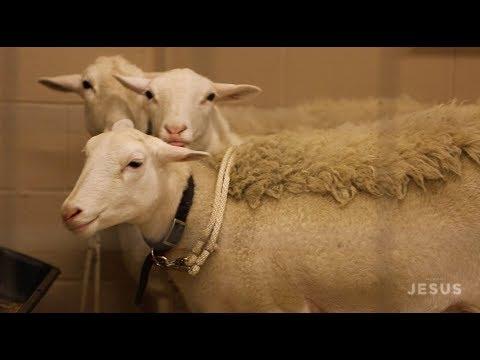 Sight & Sound Theatres® - JESUS: Training the Animals