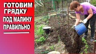 Будущий урожай малины зависит от того, как подготовить грядку под малину