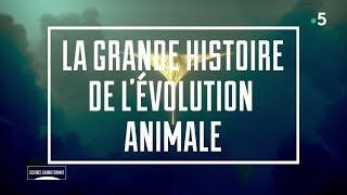 La Grande Histoire De L'Evolution Animale (France 5 - 2019)