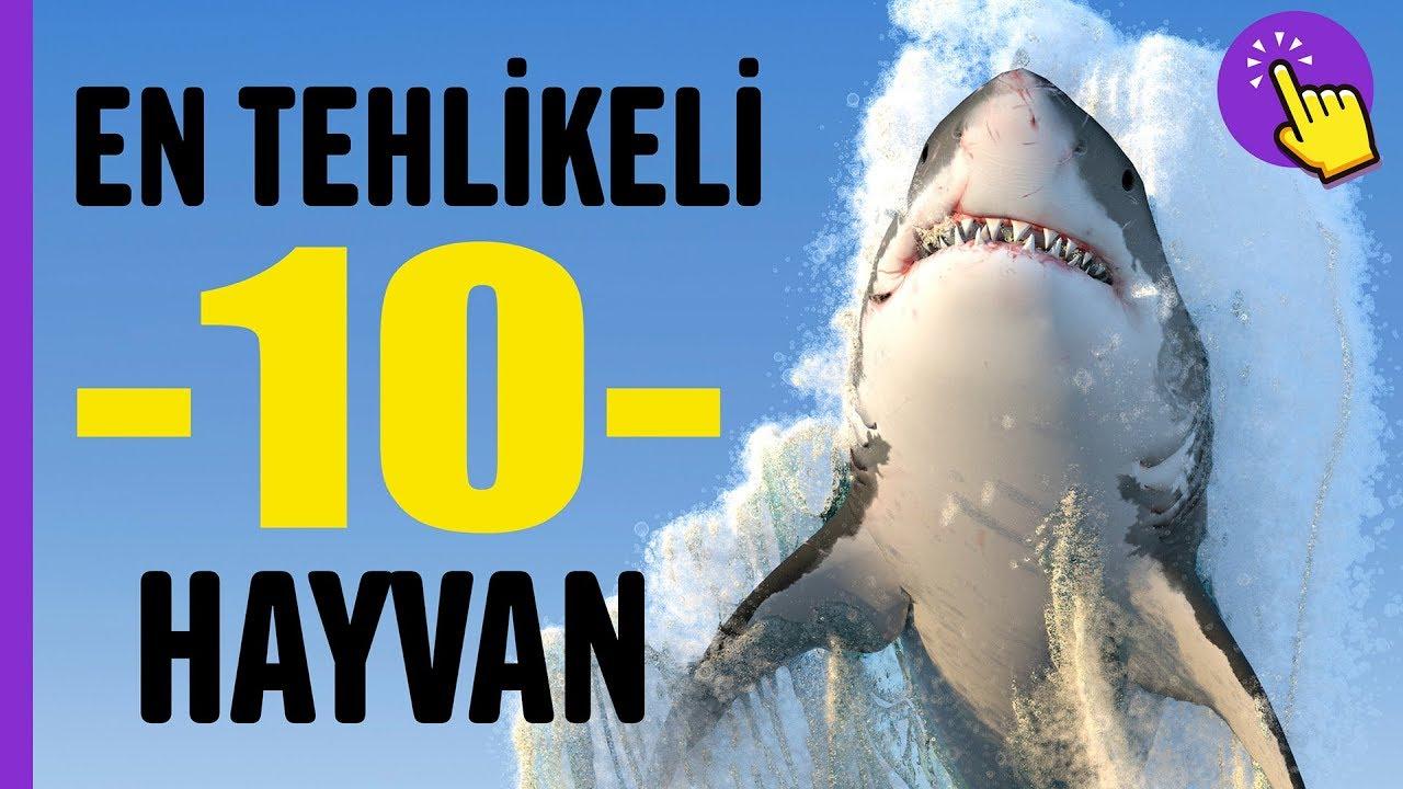 En tehlikeli 10 Hayvan | Hayvanlar Alemi | Aklında Olsun
