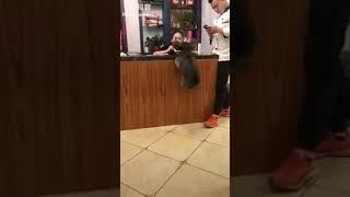 Clip hot chó lò xo