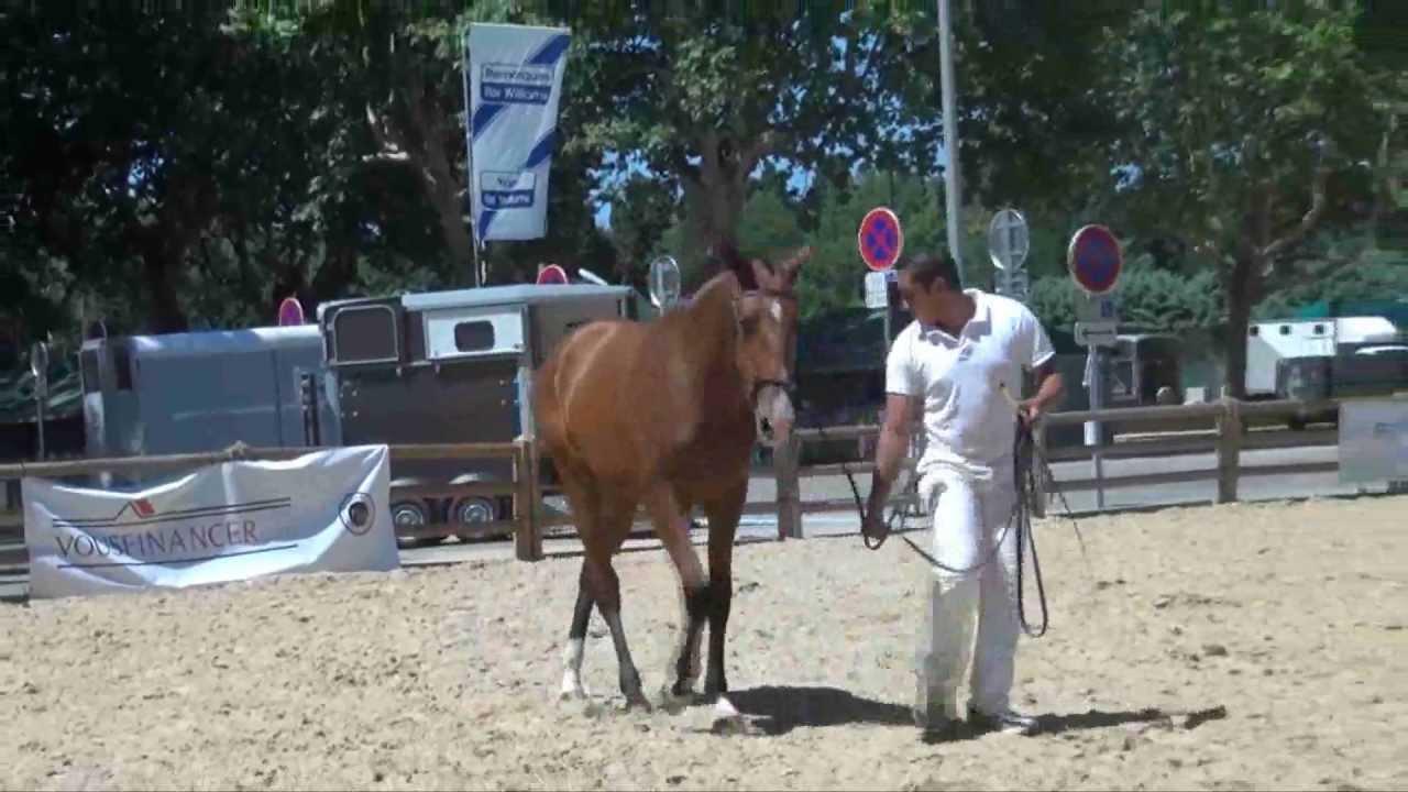 4 réflexions sur « Les Rencontres Equestres Méditerranéennes de Beaucaire 2012 »